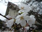 04.里見荘(2010年3月18日)