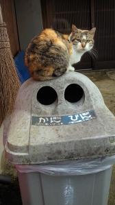 猫(2010年3月26日)