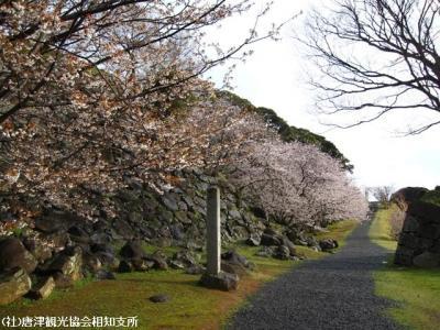 02.桜と陣跡ウォーク(2010年3月28日)