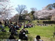 06.桜と陣跡ウォーク(2010年3月28日)