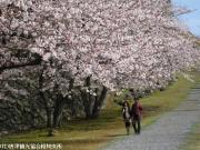 08.桜と陣跡ウォーク(2010年3月28日)