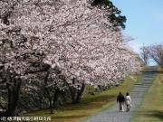 09.桜と陣跡ウォーク(2010年3月28日)
