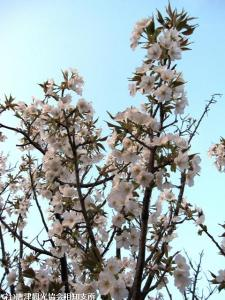 08.鏡山(2010年3月28日)