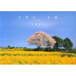 九州の一本桜