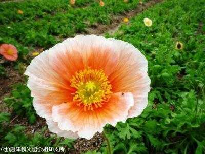 01.佐里温泉(2010年4月21日)