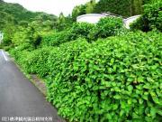 01.シャトルバス周辺(2010年5月25日)