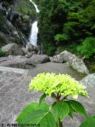 17.滝つぼ周辺(2010年5月25日)