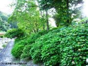 04.ほたる橋周辺(2010年5月31日)