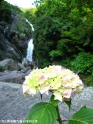 10.滝つぼ周辺(2010年5月31日)