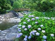 02.ほたる橋周辺(2010年6月11日)
