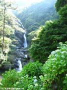 06.滝周辺(2010年6月11日)