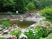 02.ほたる橋周辺(2010年6月16日)
