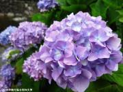 04.ほたる橋周辺(2010年6月16日)