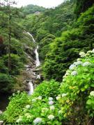 06.滝つぼ周辺(2010年6月16日)