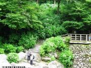 07.滝つぼ周辺(2010年6月16日)