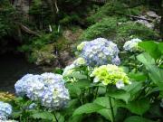 08.滝つぼ周辺(2010年6月16日)