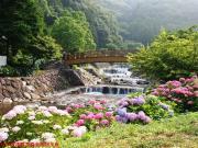 02.ほたる橋周辺(2010年6月17日)