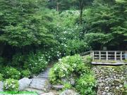 07.滝つぼ周辺(2010年6月17日)