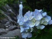 09.滝つぼ周辺(2010年6月17日)