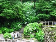 08.滝つぼ周辺(2010年6月21日)