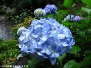 09.滝つぼ周辺(2010年6月21日)