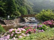 02.ほたる橋周辺(2010年6月23日)