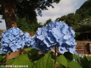 05.ほたる橋周辺(2010年6月23日)