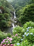 06.滝つぼ周辺(2010年6月23日)