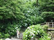 07.滝つぼ周辺(2010年6月23日)