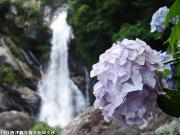 09.滝つぼ周辺(2010年6月23日)