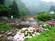 02.ほたる橋周辺(2010年6月25日)