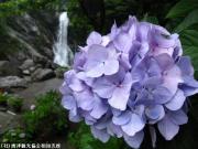 09.滝つぼ周辺(2010年6月25日)