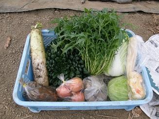 2010_0128_セット野菜