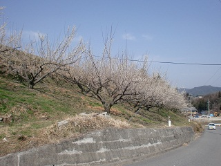 2010320.jpg