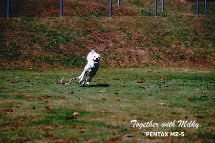 20091117_PENTAX_MZ5_007.jpg