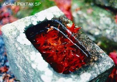 20091213_PENTAX_SP_005.jpg