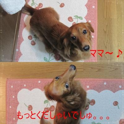 cats_20091209220616.jpg