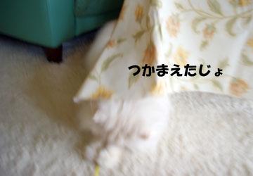 IMGP0584.jpg