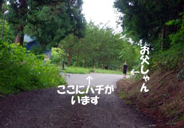 IMGP4615.jpg