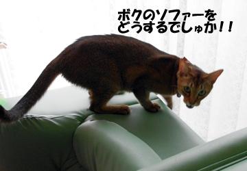 IMGP6408.jpg