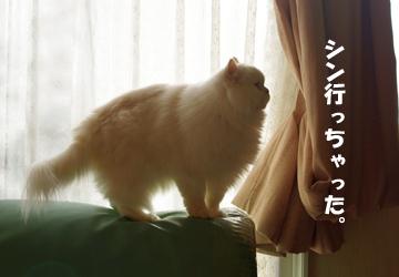IMGP8123.jpg