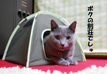 IMGP9011.jpg