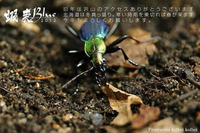 111_20120115071411.jpg