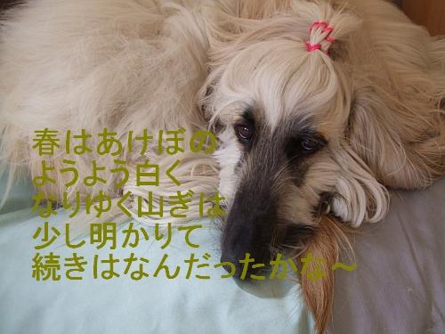 PO20110502_0011.jpg