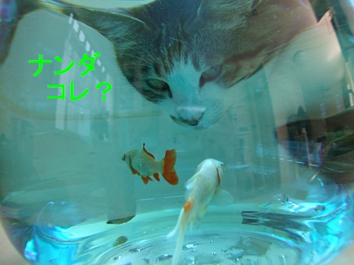 PO20110515_0005.jpg