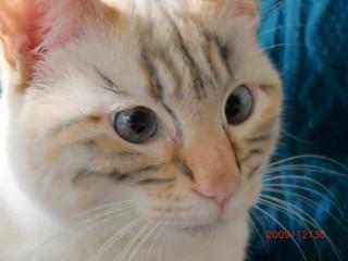 tiger-makeup02.jpg