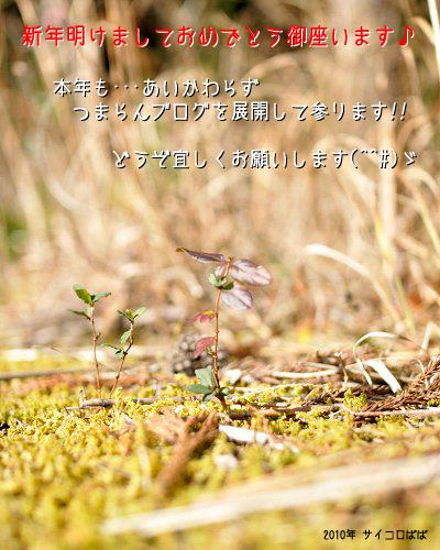 20100104_001.jpg