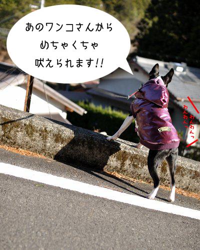 20100104_004.jpg
