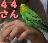 s-DSCF1286t.jpg