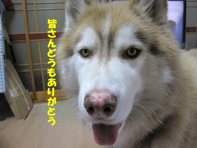 IMG_2772お礼